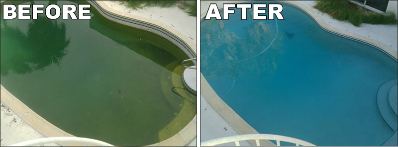 Algae Buster Service Pool And Spa Service Monmouth