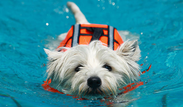 Protect Your Pups With These Pet Pool Safety Tips Pool